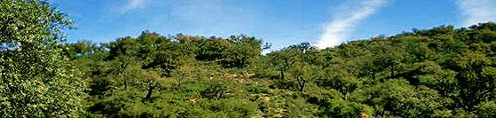 aracenaparque